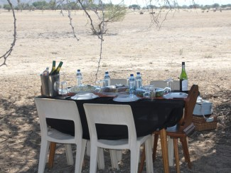 Lunch in Namibia under an Acacia Tree
