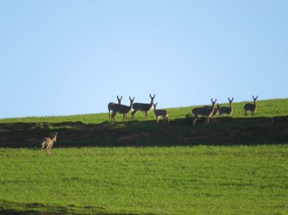 Vaal-Rhebuck-guided-hunt-in-the-Overberg-(2)