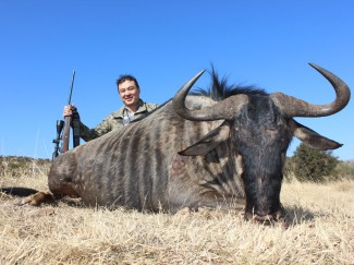 Blue-Wildebeest---Guided-hunt--South-Africa