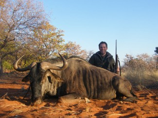 Blue-Wildebeest-Bull---Africa-Safari-hunt