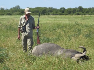 Buffalo-Bull-on-a-flood-plain-in-Zimbabwe-hunt