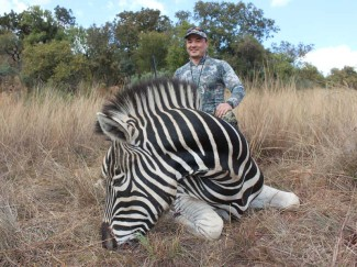Burchells-Zebra-on-Africa-Safari-hunt