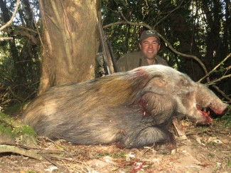 Bushpig-in-dense-forest-africa-hunt