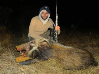 Bushpig-on-a-Western-Cape-hunt