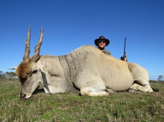Eland-Bull-guided-hunt-South-Africa