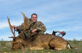 One Day Fallow Deer Stag Hunt
